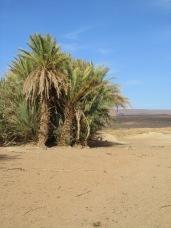 Marokko nov-dec 2010 515